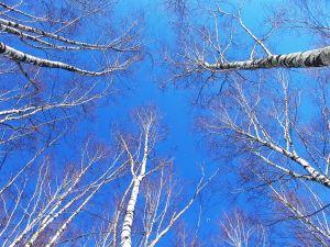 Russian Siberian sky
